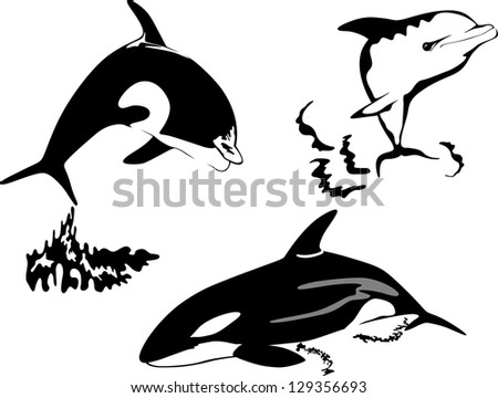 Killer whale. Silhouettes - stock vector