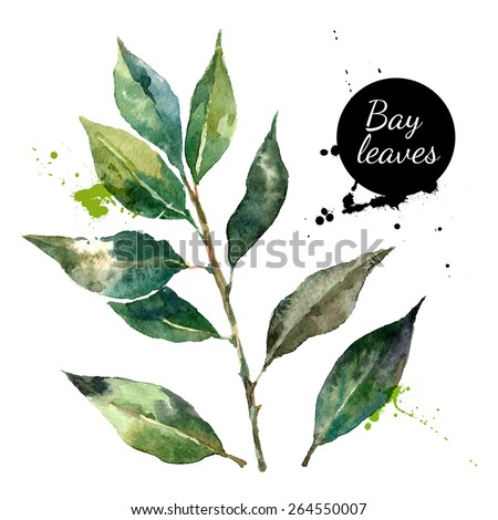 Kitchen herbs and spices banner. Vector illustration. Watercolor bay leaf - stock vector