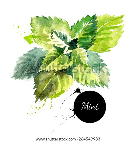Kitchen herbs and spices banner. Vector illustration. Watercolor mint - stock vector