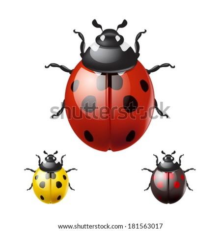 Ladybug isolated on white background. EPS10 vector. - stock vector