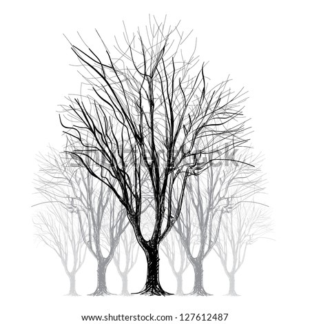 large bare tree without leaves - hand drawn - stock vector