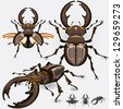 Large Dark Stag Beetle Insect Bug - stock vector