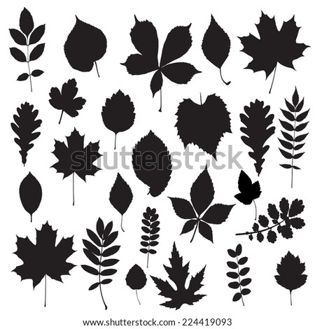 Leaf collection - vector silhouette - stock vector