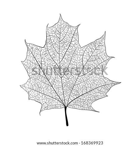 Leaf skeleton on white background - stock vector