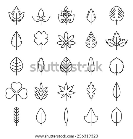 Leaf vector, flora, linear style black contour on a white background - stock vector