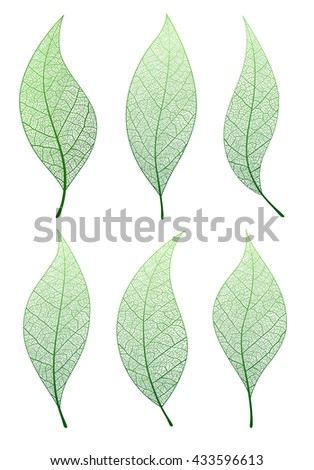 Leaf, vector set . Collection green natural tree leaves.  - stock vector