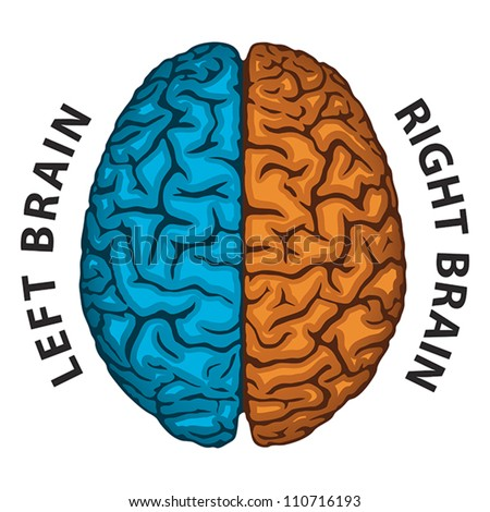 Left Brain, Right Brain. Human brain hemispheres. EPS 8 ...