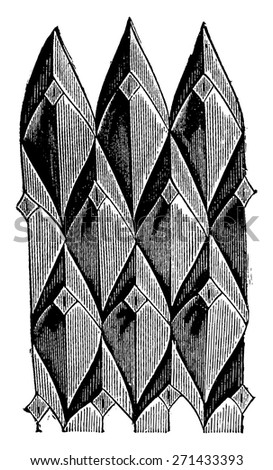 Lepidodendrons scales, vintage engraved illustration. - stock vector