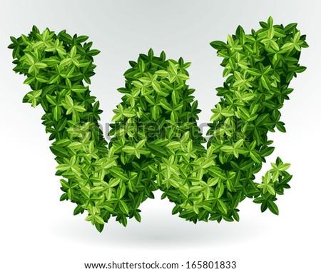 Letter W, green leaves summer vector alphabet. - stock vector