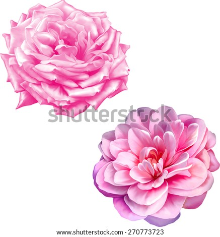 Light Pink purple rose, Camellia flower isolated on white background - stock vector