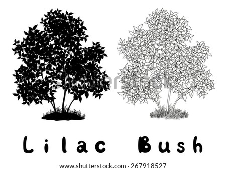 Lilac Bush with Leaves and Grass Black Silhouette, Contours and Inscriptions Isolated on White Background. Vector - stock vector