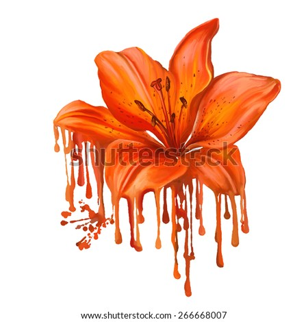 lily vector illustration  hand drawn  painted watercolor  - stock vector