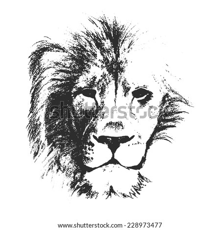 lion head. hand drawn. vector illustration. - stock vector