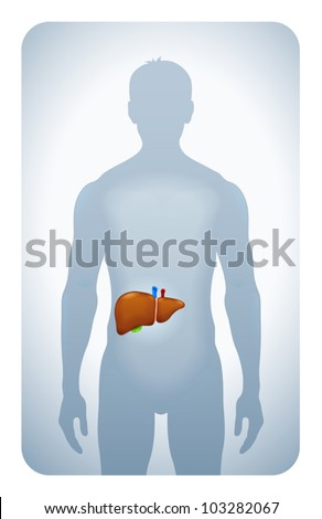 liver highlighted on the silhouette of a man - stock vector