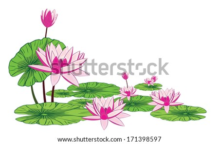 Lotus flower isolate on white background - stock vector