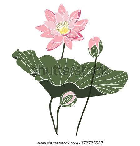 Lotus flower with leaf and two buds isolated vector design. Botanical composition on white paper - stock vector
