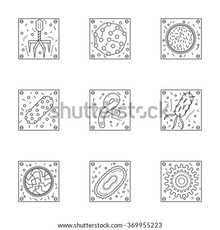 Magnified bacteria and viruses. Bacteriology and virology science. Pathogenic organisms. Set of stylish flat line vector icons. Elements of web design for business, website or mobile app. - stock vector