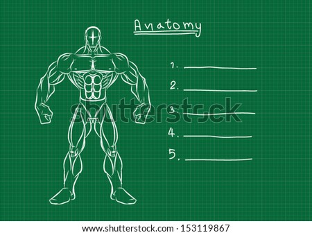 Male Anatomy Front Reference - stock vector