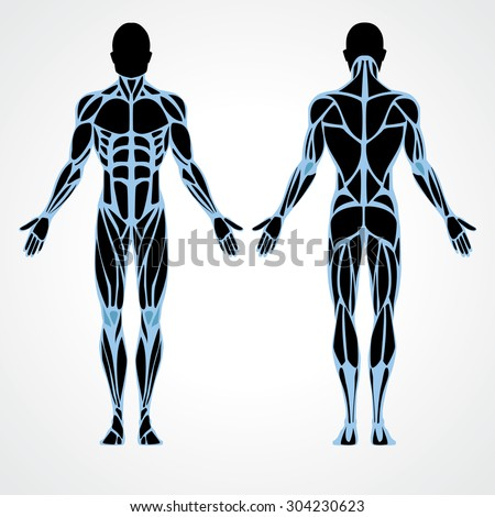 Male muscular anatomy vector scheme - posterior and anterior view. Fitness training, muscles street workout. Male fitness model.  Sport & fitness, muscle body. Exercise and muscle guide. Gym training. - stock vector