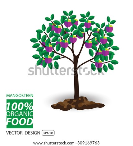Mangosteen, fruits vector illustration. - stock vector
