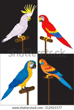 many parrot and macaw on white and black background. - stock vector