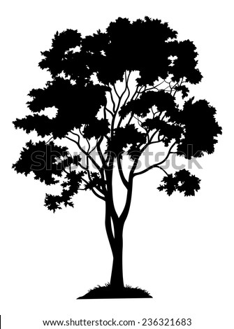 Maple tree with leaves and grass, black silhouette on white background. Vector - stock vector