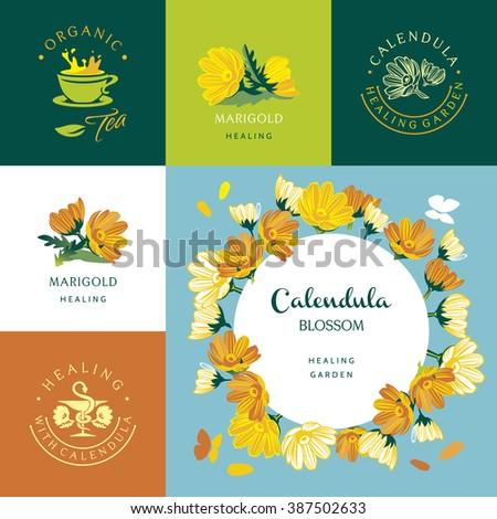 Marigold Calendula, set of vector elements and illustration - stock vector