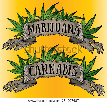 marijuana cannabis leaves and old paper parchment vector - stock vector