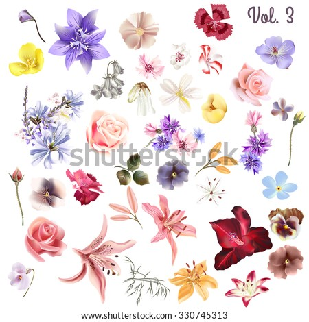 Mega collection of vector  high detailed realistic field  flowers on white for design - stock vector
