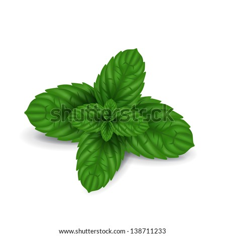 mint leaves isolated on white background - stock vector