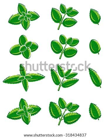 Mint leaves set. Vector - stock vector