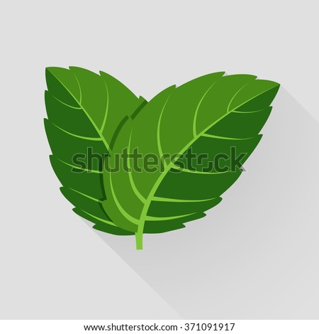 Mint vector leaves. Plant mint, green leaf mint, organic and fresh mint illustration - stock vector