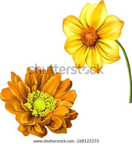 Mona Lisa flower, Orange and yellow flower, Spring dahlia flower.Isolated on white background. illustration of Bright colorful Dahlia flower, - stock vector