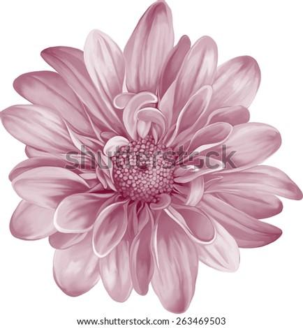 Mona Lisa flower, Red flower, Spring flower.Isolated on white background - stock vector