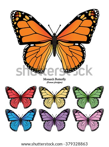 Monarch Butterfly - stock vector