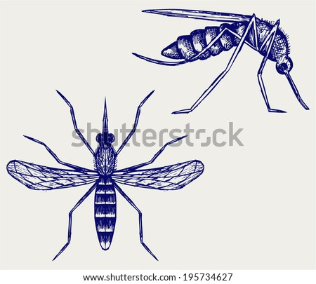 Mosquito. Doodle style - stock vector