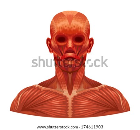 Muscle face - stock vector