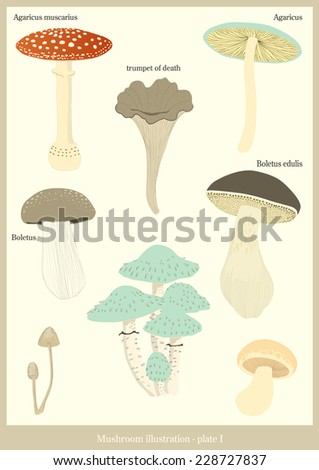 Mushroom illustration - stock vector