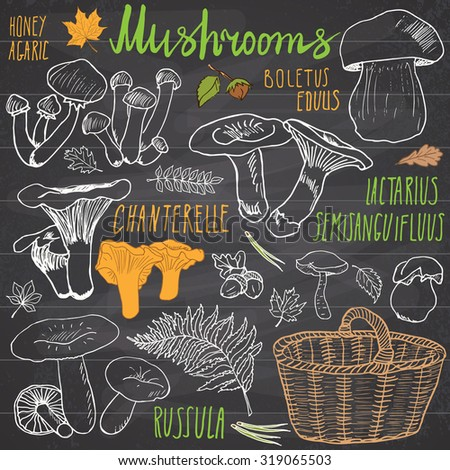 Mushrooms sketch doodles hand drawn set. Different types of edible and non edible mushrooms. Vector icons on white background. - stock vector