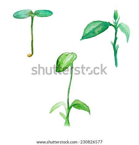 Natural growing plants concept. Watercolor ecological illustrations set. Isolated vector objects - stock vector