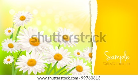 Nature background with fresh daisy and ripped paper   illustration - stock vector