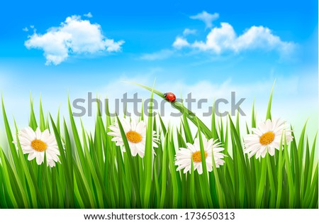 Nature background with green grass, ladybug and flowers. Vector.  - stock vector