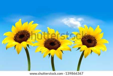 Nature background with three yellow sunflowers. Vector - stock vector