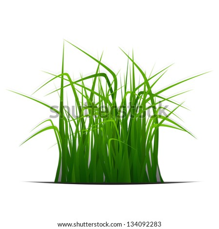 new ecology banner with green grass isolated on white background can use like natural design - stock vector