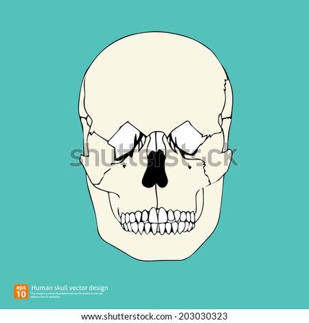 New human skull vector design  - stock vector