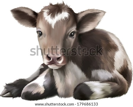 Newborn Calf, black and white baby cow, on the white isolated background - stock vector