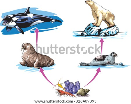 North pole food chain example - stock vector