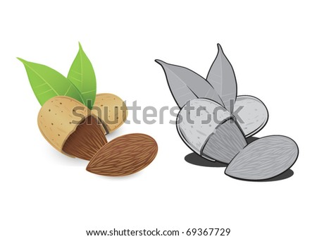 Nut almond. - stock vector