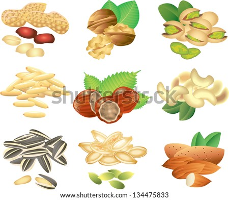 nuts and seeds photo-realistic vector set - stock vector