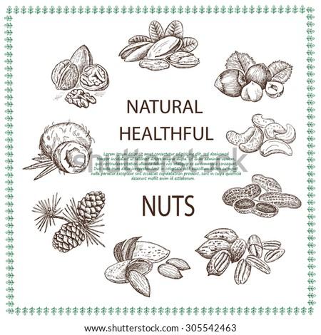 nuts set - stock vector
